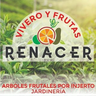 Logo de Vivero &Frutas 🍃RENACER🌱