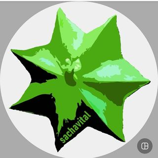 Logo de sachavital
