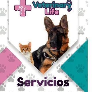 Logo de •VETERINARY LIFE•
