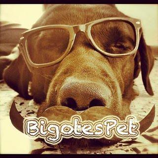Logo de BigotesPet