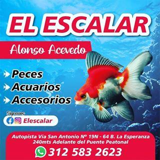 Logo de Piscicultura El Escalar