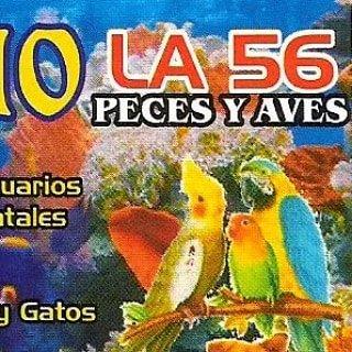 Logo de acuario la 56