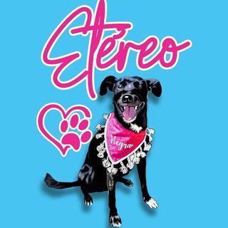 Logo de Etéreo pets