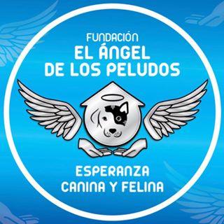 Logo de Fundacion ElAngel D los Pludos