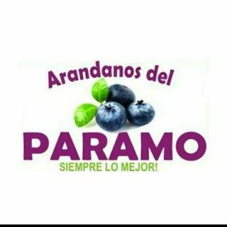 Logo de ARÁNDANOS