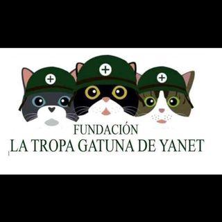 Logo de La tropa gatuna de yanet