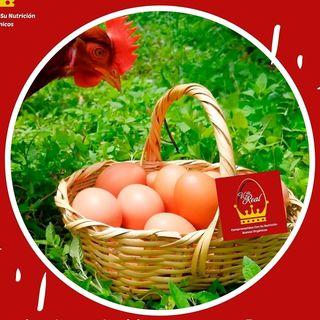 Logo de huevosorganicosvillareal